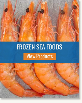Frozen Sea Fish Exporter,Frozen Queen Fish Supplier,India
