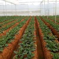 Green House Project Consultant