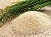 Rice agric THMB