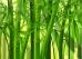 Bamboo agric THMB