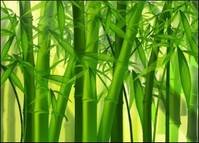 Bamboo agric