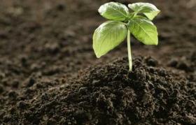 Fertilizer agric