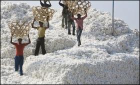 cotton-export30092010.jpg