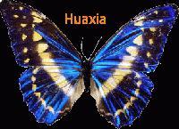 HUAXIA DISPLAY CO., LTD.