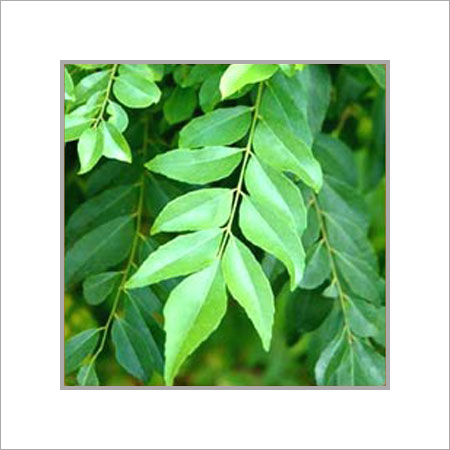 Curry Leaves in  Netaji Subhash Road