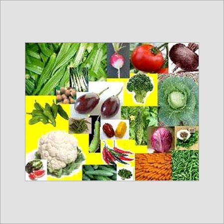 Vegetable Sowing Seeds