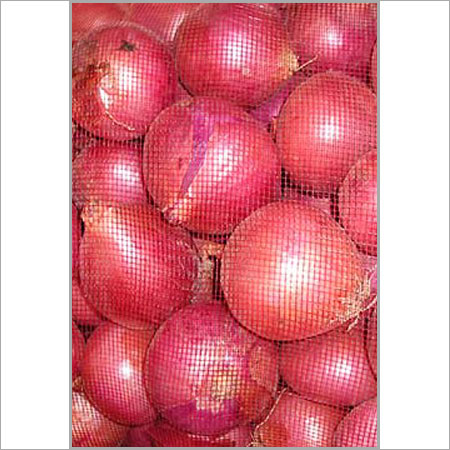 Red Onion in  Wadgaon Sheri
