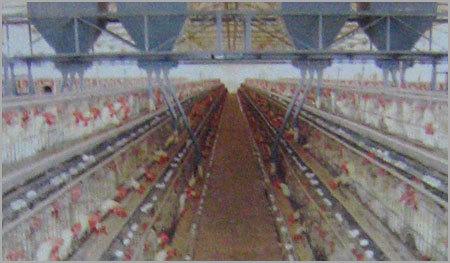 Feeding Systems - CHAKRA GROUP OF COMPANIES, Plot 11-7-265