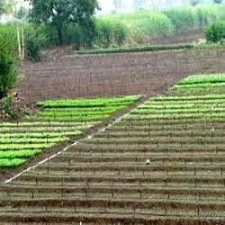 Drip Irrigation System In Indore, Madhya Pradesh - Dealers