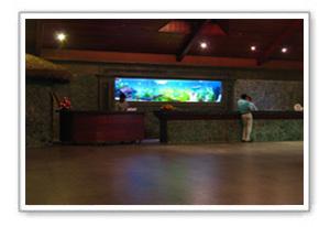 Designer Aquariums