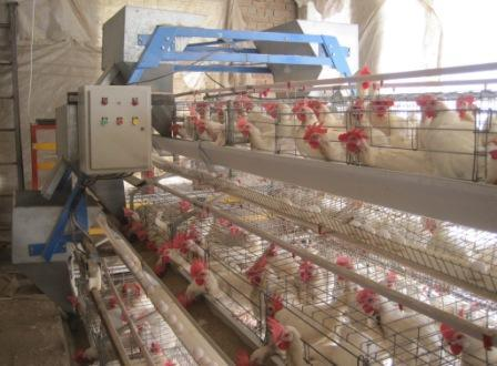 Layer Cages With Feed Trolley