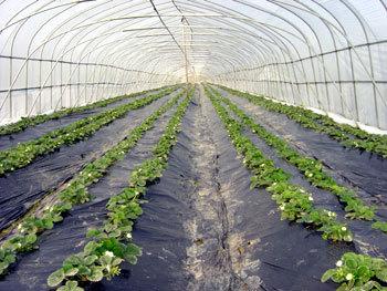 High Tech Agriculture Assignment
