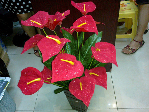 18h Calla Lily Bunch Flower