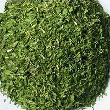 Dehydrated Coriander Spice Powder