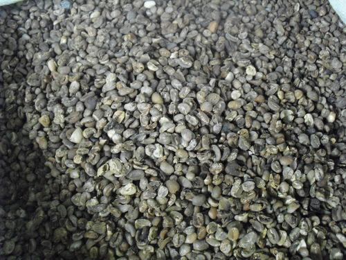 Arabica Coffee Beans Grade 5