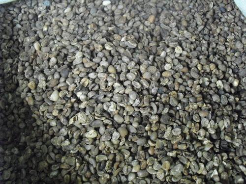 Arabica Coffee Beans Grade 6