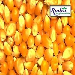 Corn (Maize And Maka)