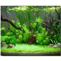 Planted Aquariums