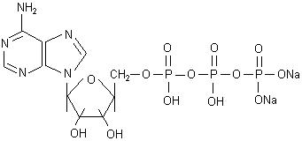Adenosine Triphosphate Disodium