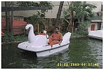 Swan Shape Two Seater Pedal Boat