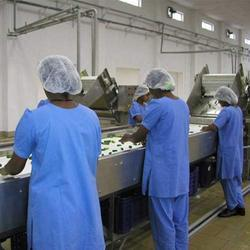 Vegetable Sorting Line