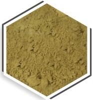 Moringa Oleifera Seeds Cake Powder