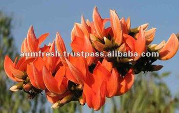 Cold Dried Palash Petals