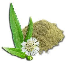 Bhringraj Powder (False Daisy/ Eclipta Alba)