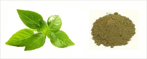 Tulsi Powder (Basil Leaves Powder)