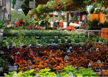 Awesome Ornamental Plants