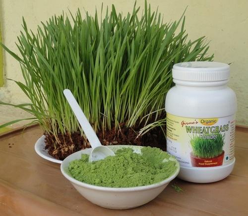 Herbal Wheatgrass Powder in  Market Yard