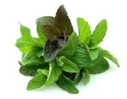 Organic Pepper Mint