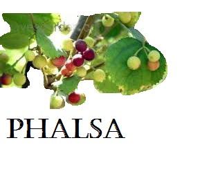 Organic Phalsa