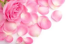Organic Pink Rose