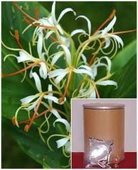 Hedychium Spicatum Root