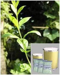 Lawsonia Alba Leaf