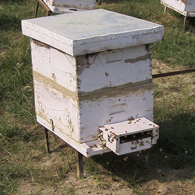 Beehives With Super