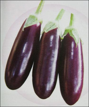 sungro seeds brinjal