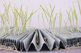 Seed Germination Paper