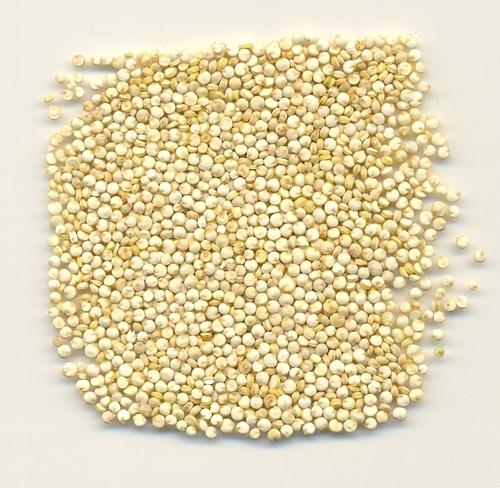Organic And Conventional White Quinoa