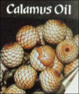 Pure Quality Calamus Oil