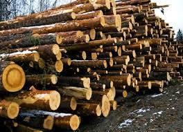 Wood Logs in   Ollur
