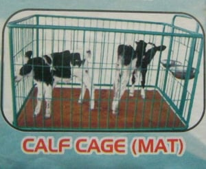 Calf Cage (Mat) For Dairy