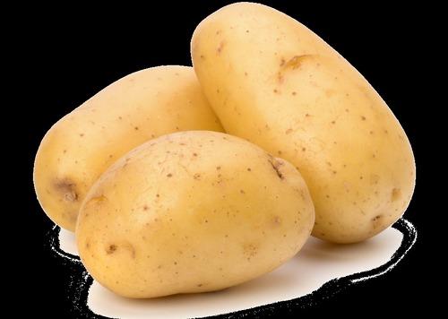 Potato in  Saligramam