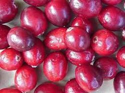Blueberry Fruit at Best Price in Chennai, Tamil Nadu   Jyoti