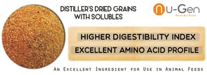 Distillers Dried Grain With Solubles
