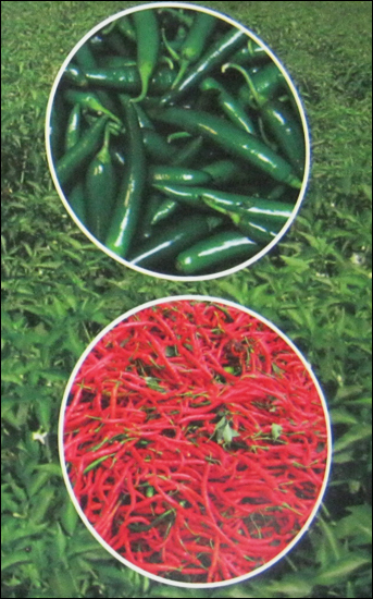 Chilli Seeds In Hyderabad, Chilli Seeds Dealers & Traders In