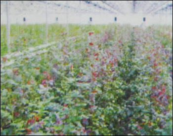 Floriculture Shade Nets
