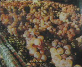 Grape Shading / Drying Net
