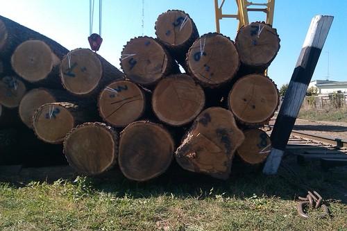 Oak Logs (Ukraine)